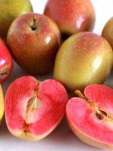 mountain rose apple